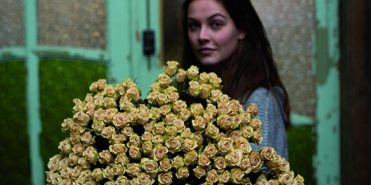 Gedroogde rozen uit Afrika