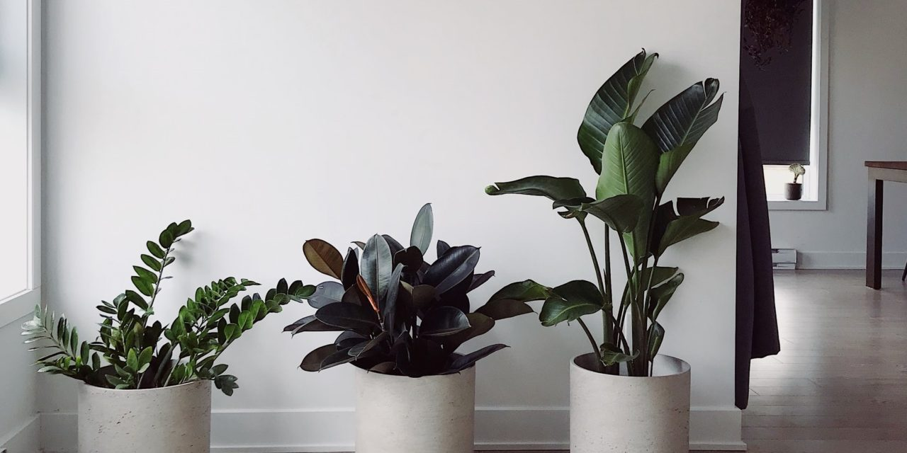 Enorme groei van webshops met huis-en tuinartikelen
